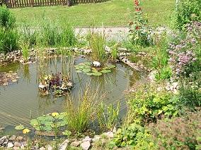 Unser garten for Algenplage im teich